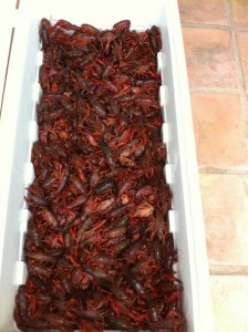 Purge The Crawfish